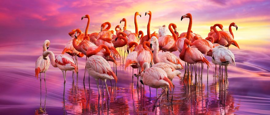 Pink-flamingo-day-2017