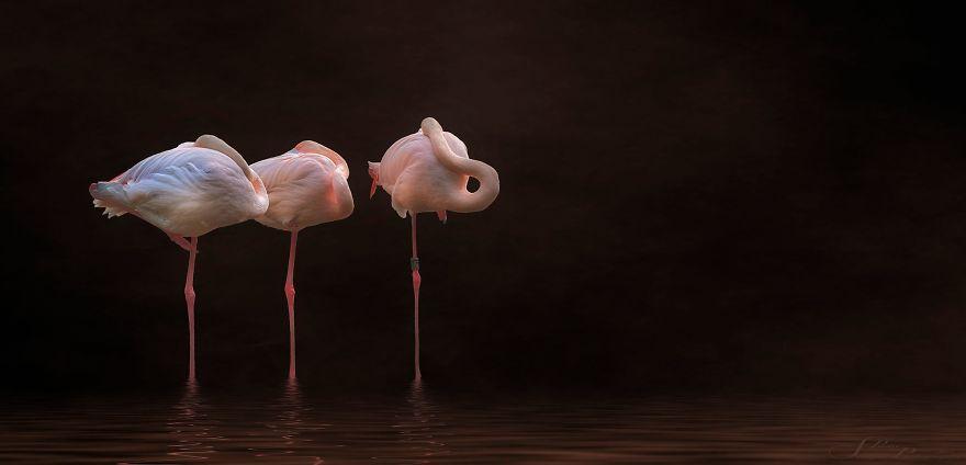 Pink-flamingo-day-2017
