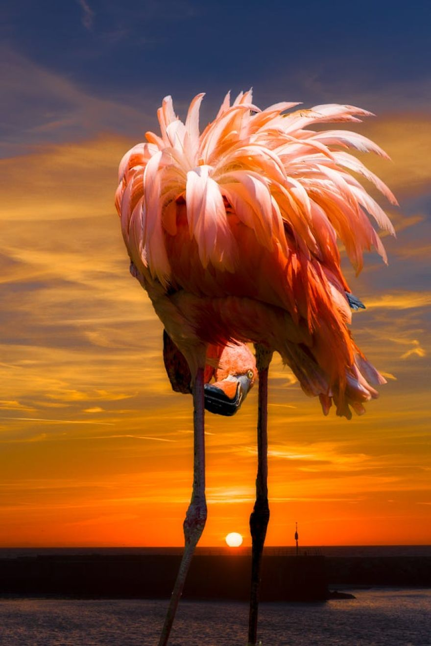 Dzień flaminga - 23 czerwca. Pink Flamingo Day - 23rd of June.