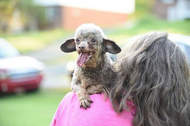poodle-rescue-puppy-mill-basement-cage-2