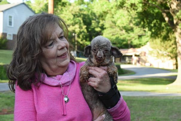 poodle-rescue-puppy-mill-basement-cage-7
