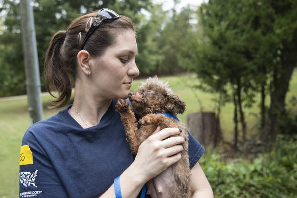 poodle-rescue-puppy-mill-basement-cage-8