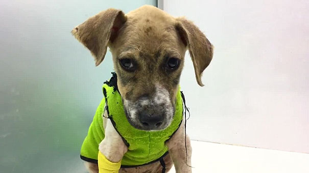 puppy-covered-clue-rescued-pascal-18