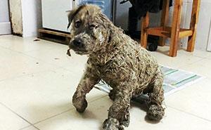 Este cachorro no se rindió después de que unos niños lo cubrieran de cola industrial y lo abandonaran