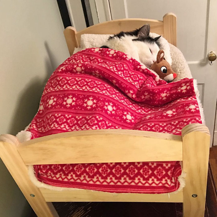 rescue-cat-sleeps-doll-bed-sophie-1