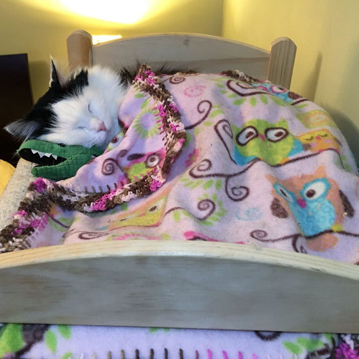 rescue-cat-sleeps-doll-bed-sophie-10