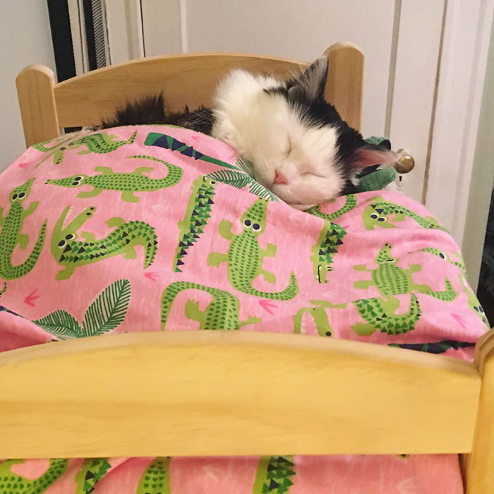 rescue-cat-sleeps-doll-bed-sophie-13