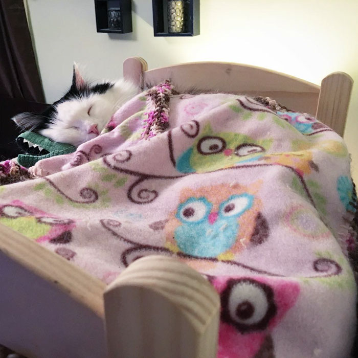 rescue-cat-sleeps-doll-bed-sophie-2
