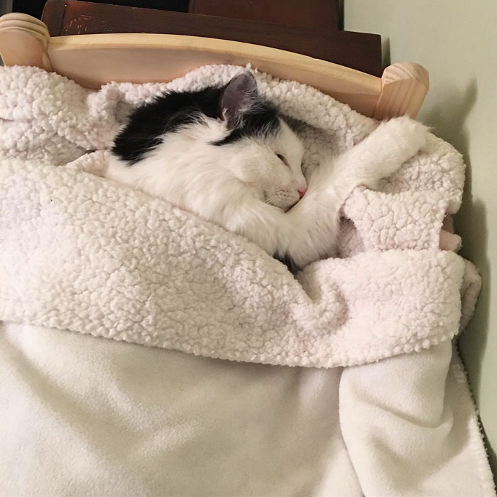 rescue-cat-sleeps-doll-bed-sophie-3