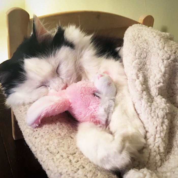 rescue-cat-sleeps-doll-bed-sophie-5