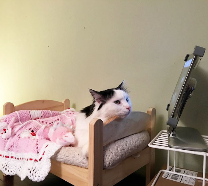 rescue-cat-sleeps-doll-bed-sophie-7