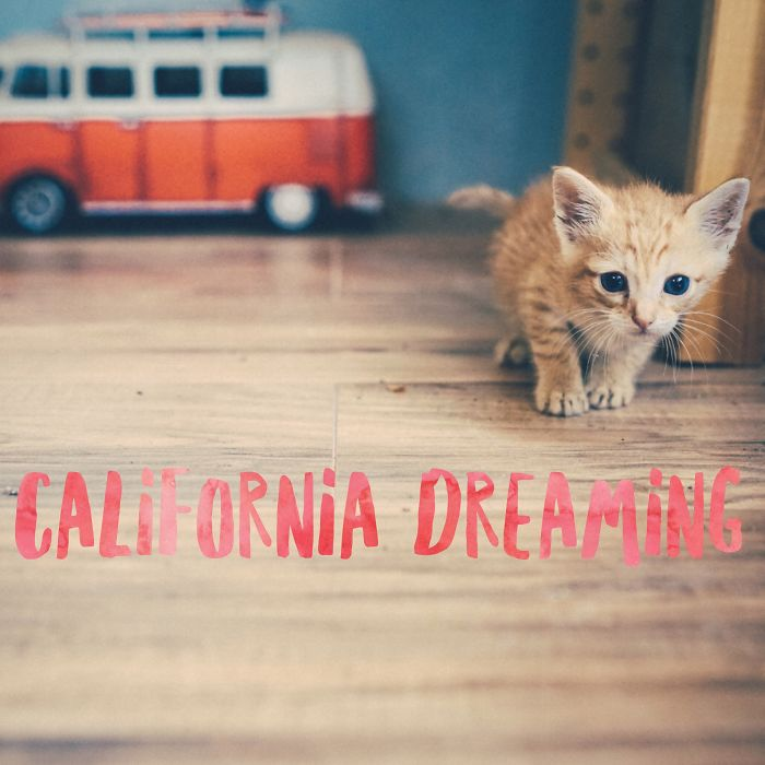 Rescue Kitten Gets A California Dreaming Photoshoot