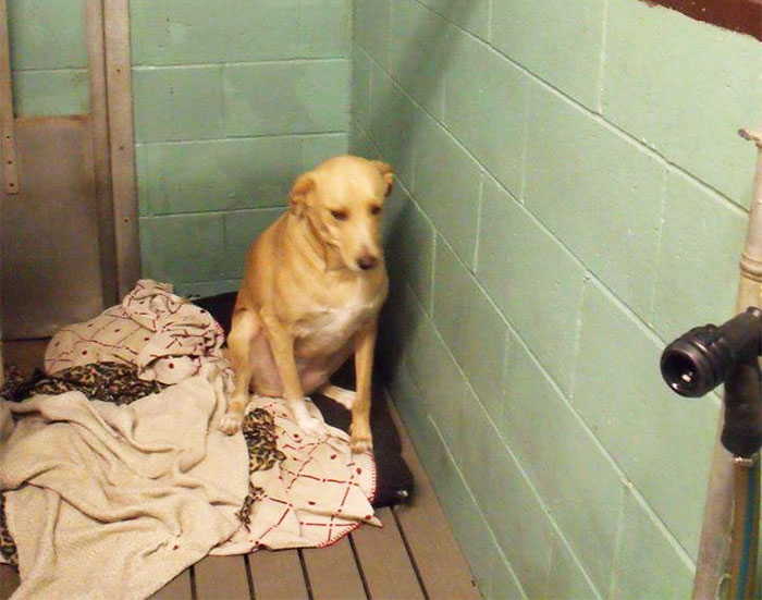 Lana The Dog Adoption