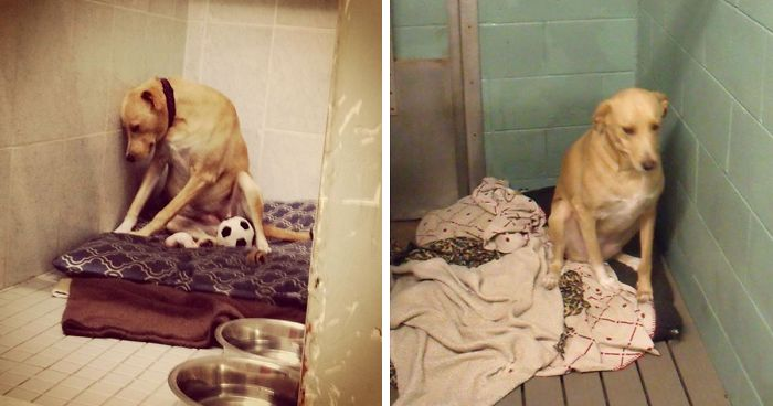 'The World's Saddest Dog' Loses Her Home Again, And Might Be Put To Sleep If No One Adopts Her Soon