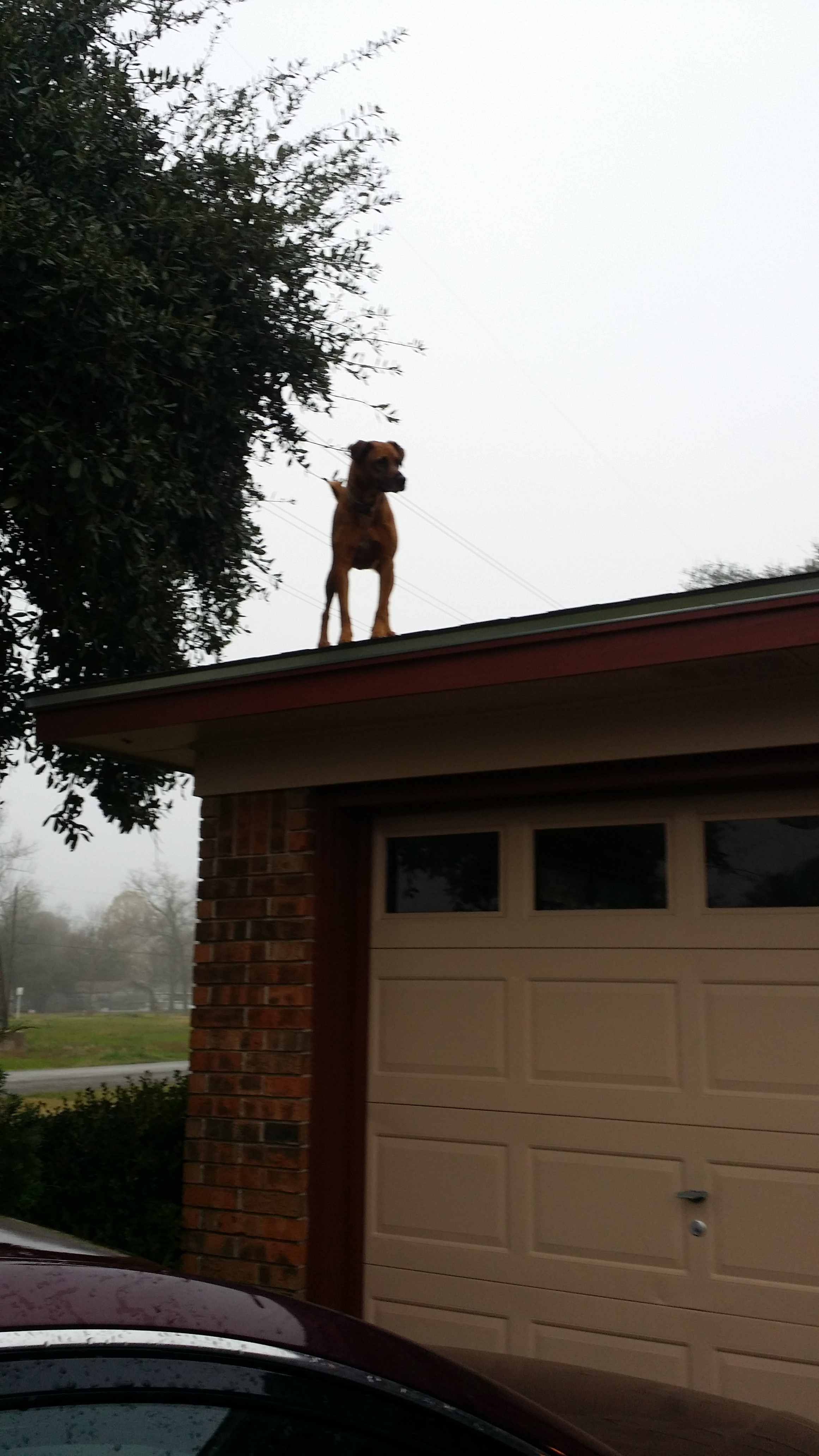 Family Makes Sign To Explain Why Their Dog Is On The Roof