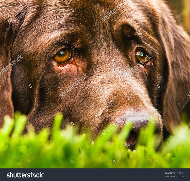 stock-photo-a-very-sad-dog-looks-like-he-is-thinking-of-his-girl-which-is-very-far-away-82314130-591b53babe0c3.jpg