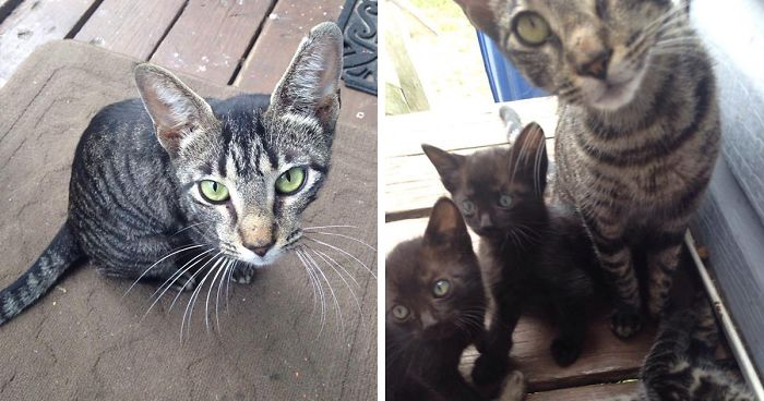 Father And Son Showed Some Love To A Stray Cat, Next Day She Came Back With A Surprise
