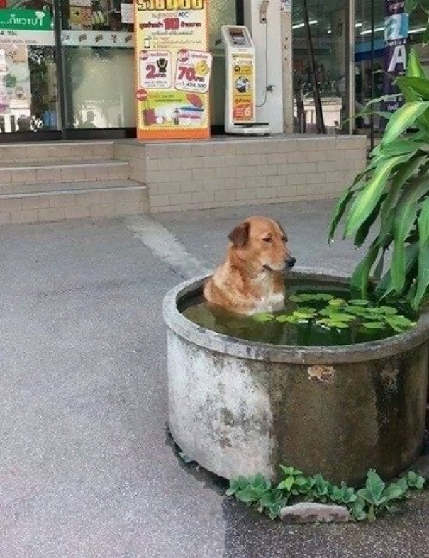 Just Chilling, Dog