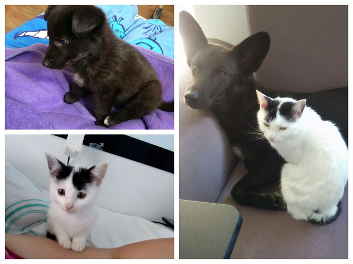 Moni And Miki On 2 Months And After 2 Years. Perfect Siblings! Yin And Yang/Black And White And White And Black