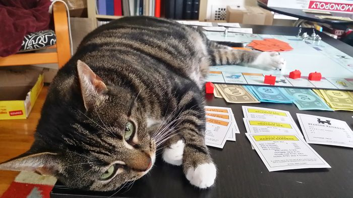 I Have Never Had A Game Of Monopoly Take So Long . . .