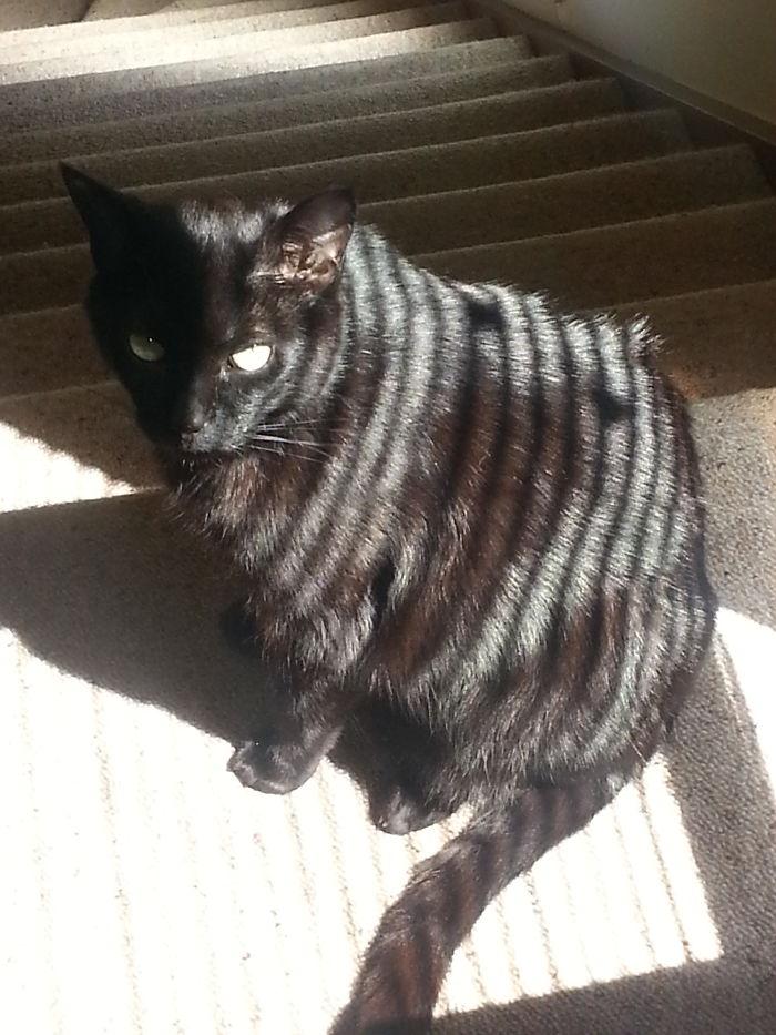 Milo The Sun Tiger