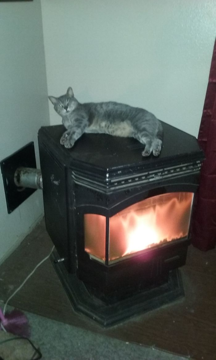 Nuts Has The Warmest Spot In The House.
