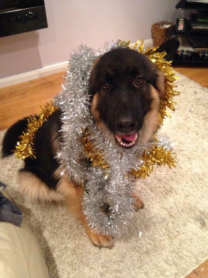 My Doggo Likes To Pretend She's A Christmas Tree