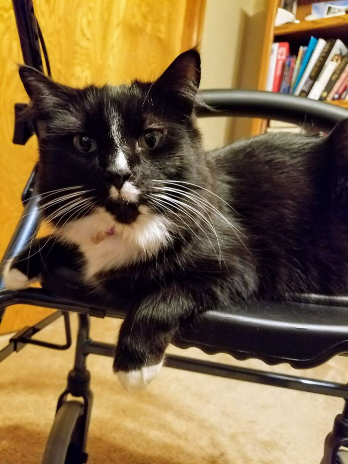 He Likes To Hang Out On My Dad's Walker. While He's Using It. . .in Fact, He Hops On As My Dad Goes By.