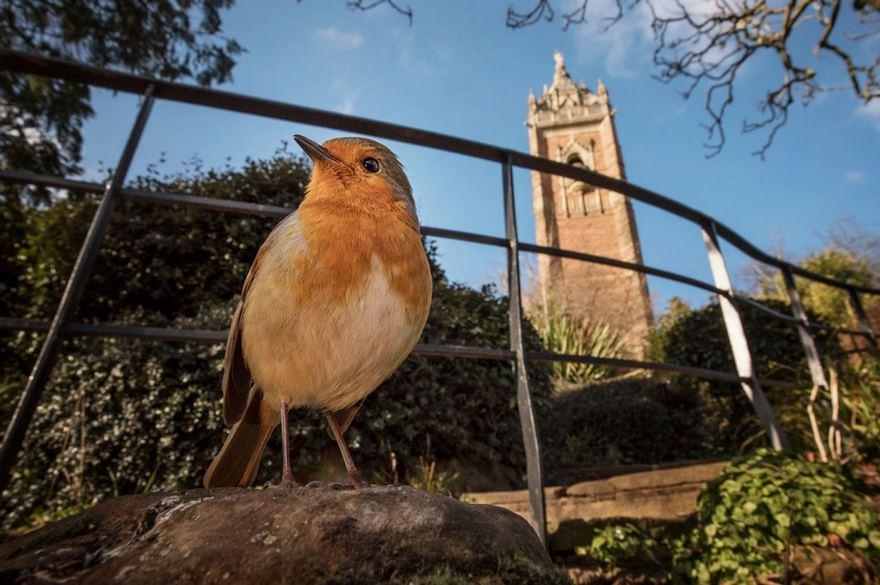 Round Robin, Bristol, Uk