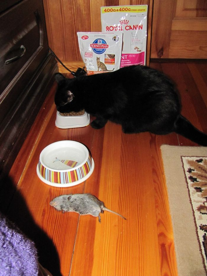 I Changed My Mind – I Will Eat Dry Food. Mouse Is For You.
