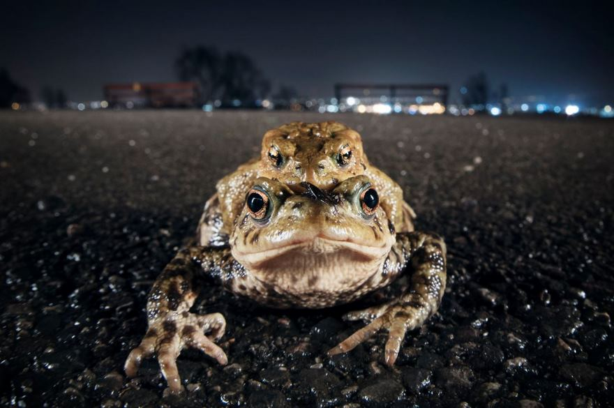Toad On The Road, Bristol, Uk
