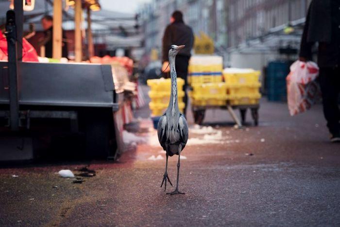 Dam Herons, Amsterdam, Netherlands