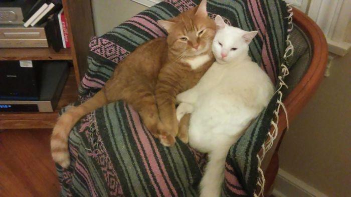 Napoleon & Wellington… So Much Love….