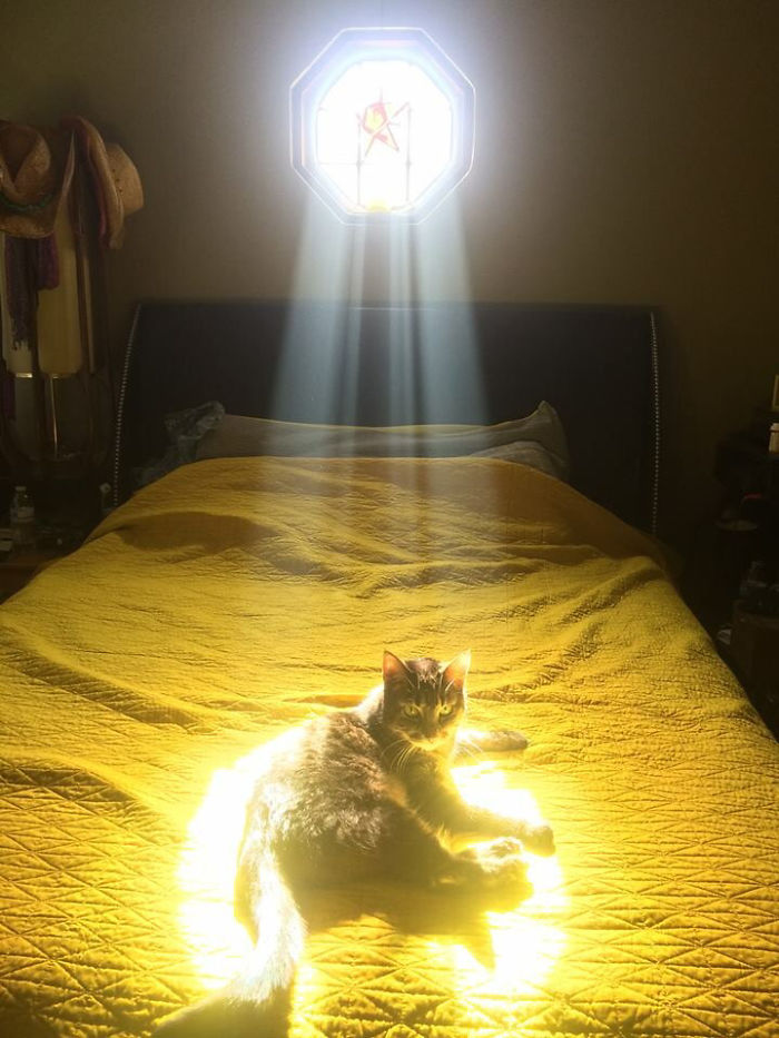 My Friend's Cat Is The Chosen One