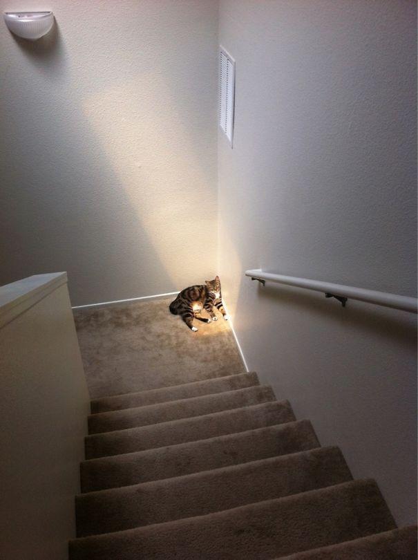 Deprived Cat Loves The Sun