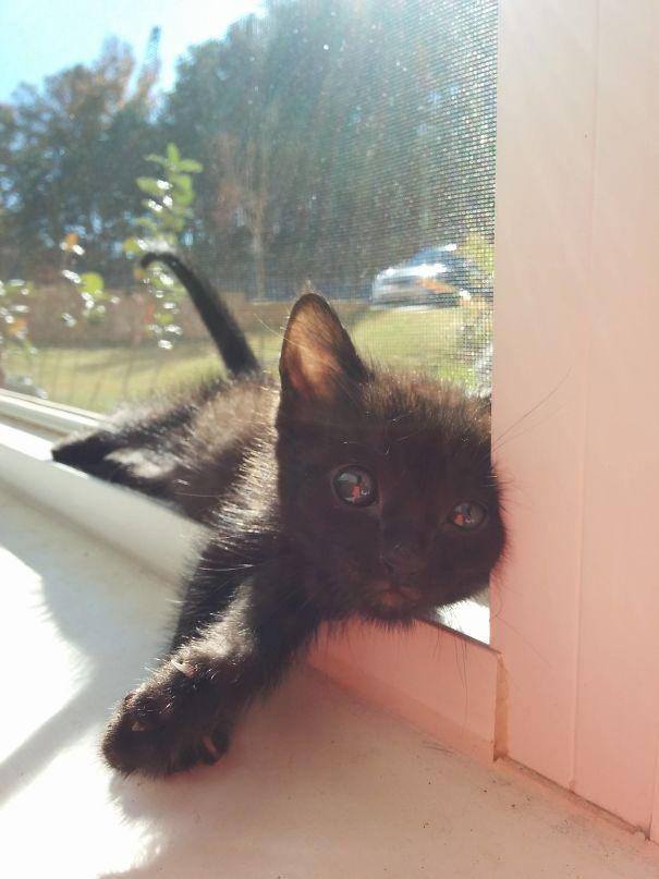 Lil Bear Soaking Up The Sun