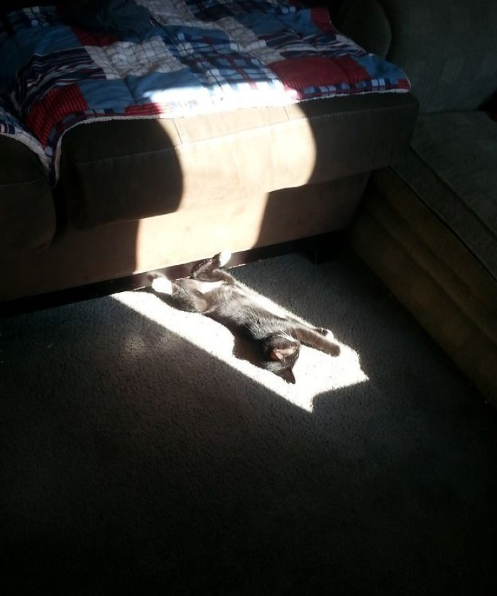 Kitten Is A Professional At Finding Sun Spots