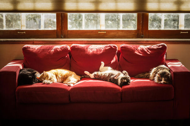 Our Cats Enjoy The Spring Sunshine In The Sun Room And Enjoy A Cat Nap