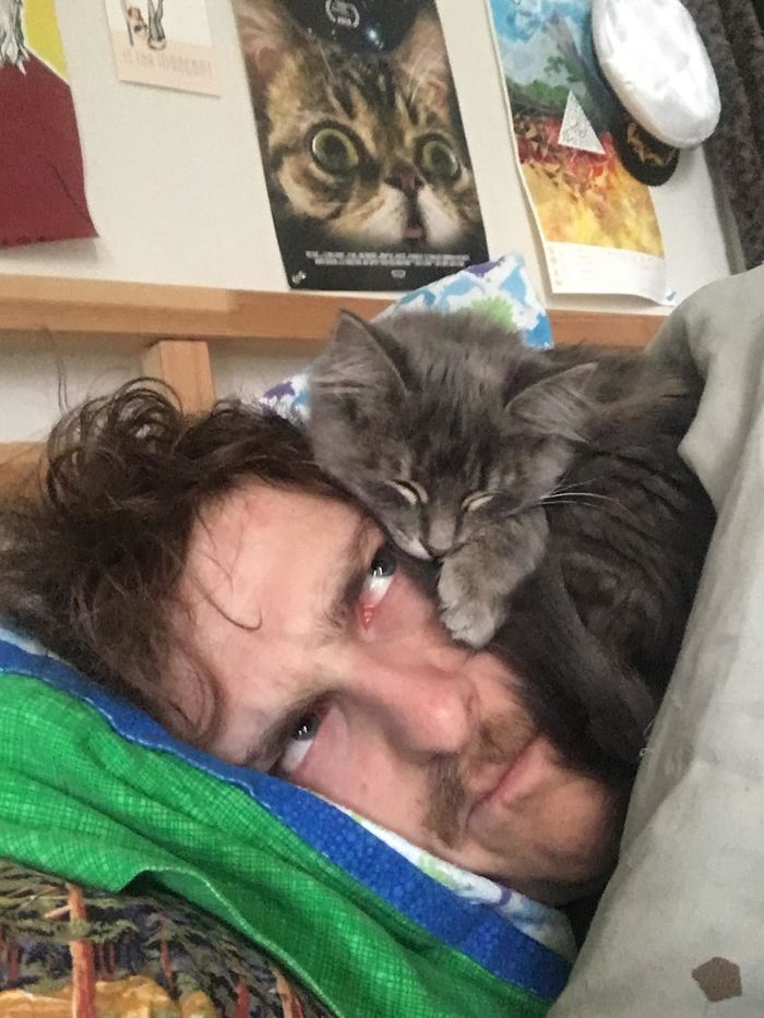 My New Cat Only Sleeps On My Head. Meet Newt