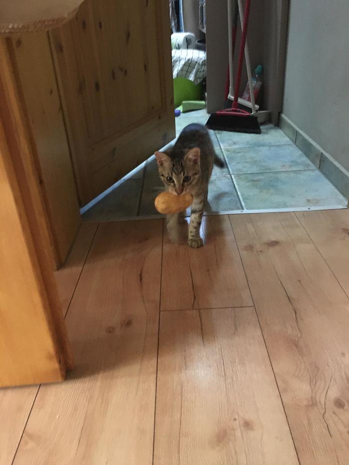 Mi gato roba patatas