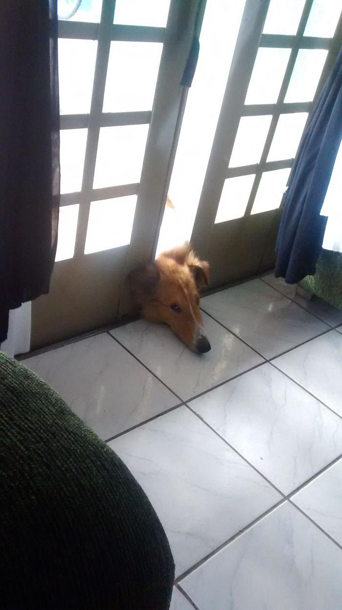 Weird Sleeping By Dog