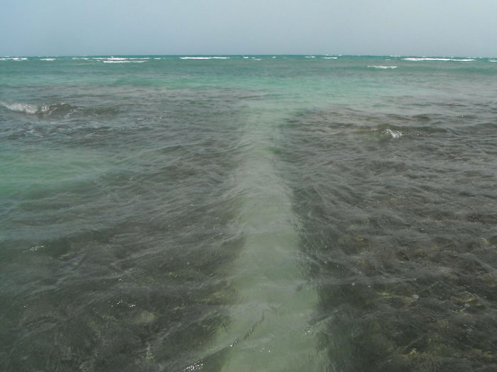 Fishermen And Tourists Made This Underwater Path In Guánica, Puerto Rico