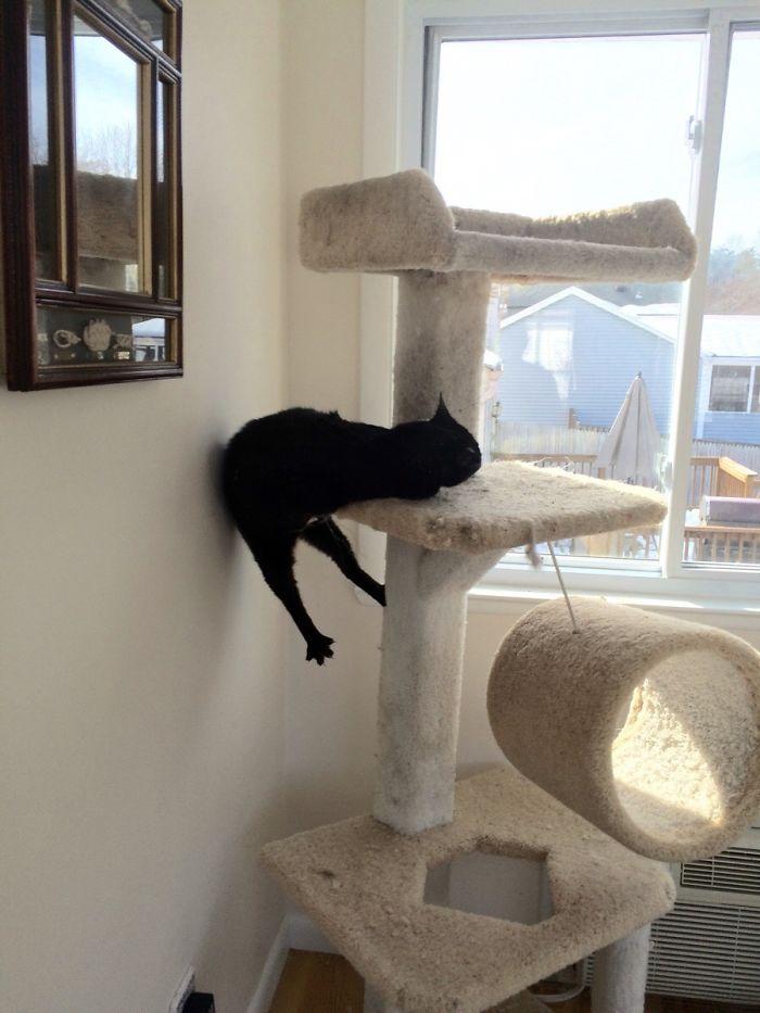 Mi gato Felix, colocado hasta las cejas de hierba gatera
