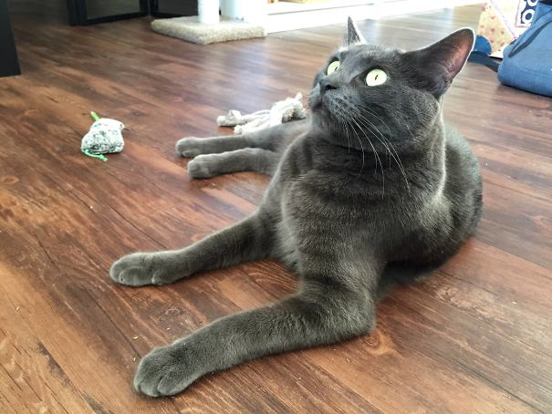 After Eating A Bunch Of Catnip, Gus Just Sat There Staring At Nothing For A Couple Minutes