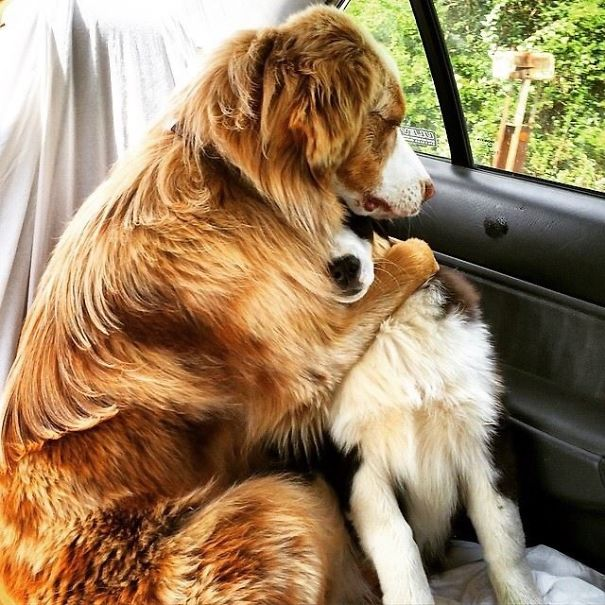 My Friend's Dogs Think They Are Going To The Vet When In Reality They Are Headed To The Park
