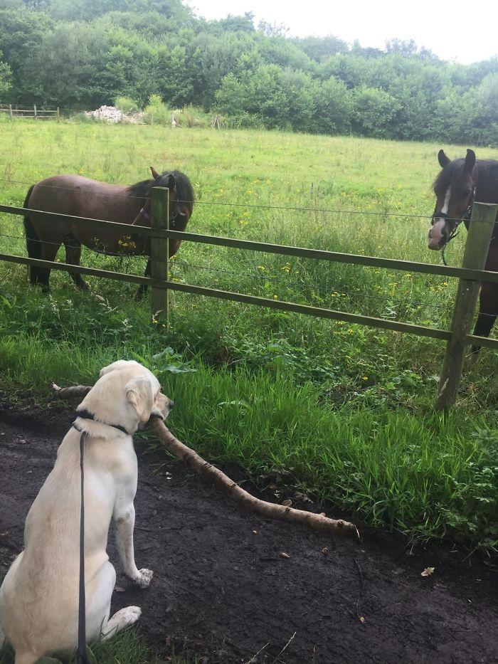 """Siempre que paseo a mi perro, busca el palo más grande para llevárselo como regalo a los """"perros grandes"""""""