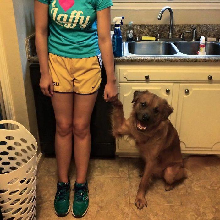Siempre ha sido muy dependiente desde cachorro, ahora sigue a su dueña por la casa y pide que le cojan de la pata