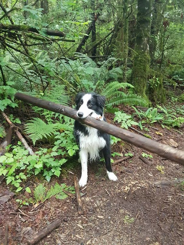 My Dog Insisted That This Was The Stick We Were Going To Play Fetch With