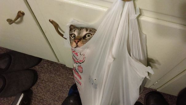 """My Wife's Cat Likes To Get High On Nip And """"Hang"""" Out In Bags Or He Meows Incessantly Until He Does"""
