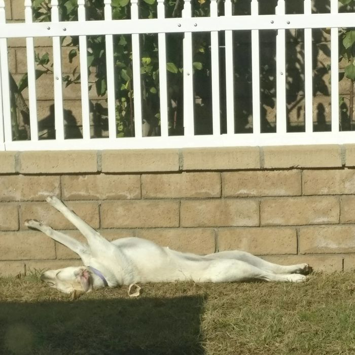 I Just Looked Outside And My Dog Was Sleeping Like This